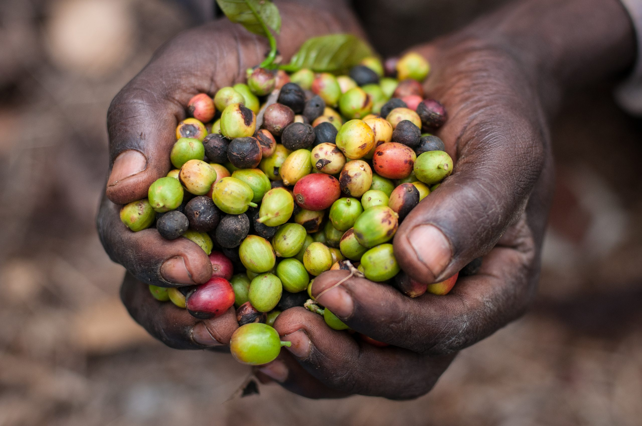 SMEs in Food Systems: A Framework for Engagement