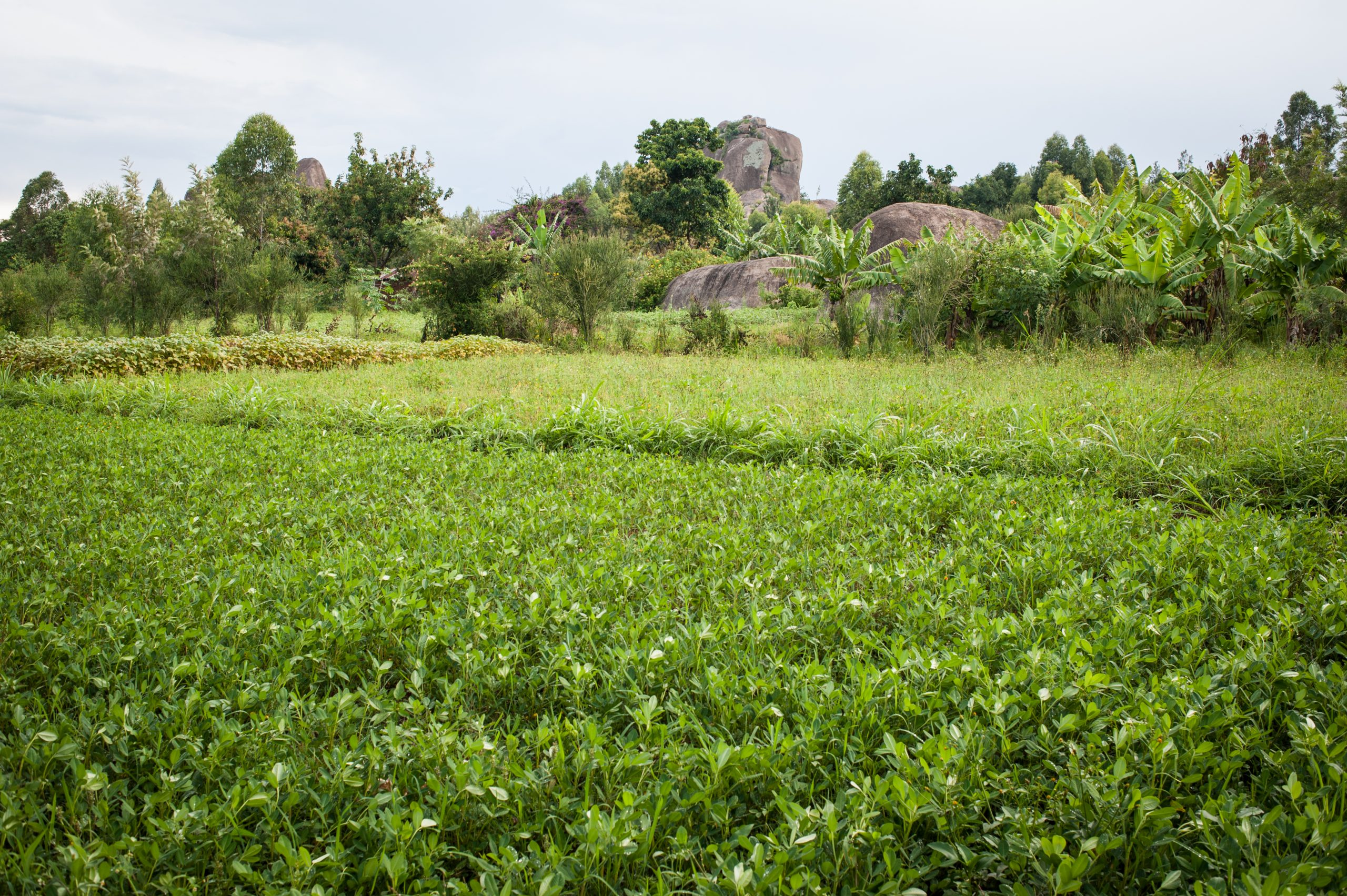 Enabling environment and smallholder finance: A complex relationship