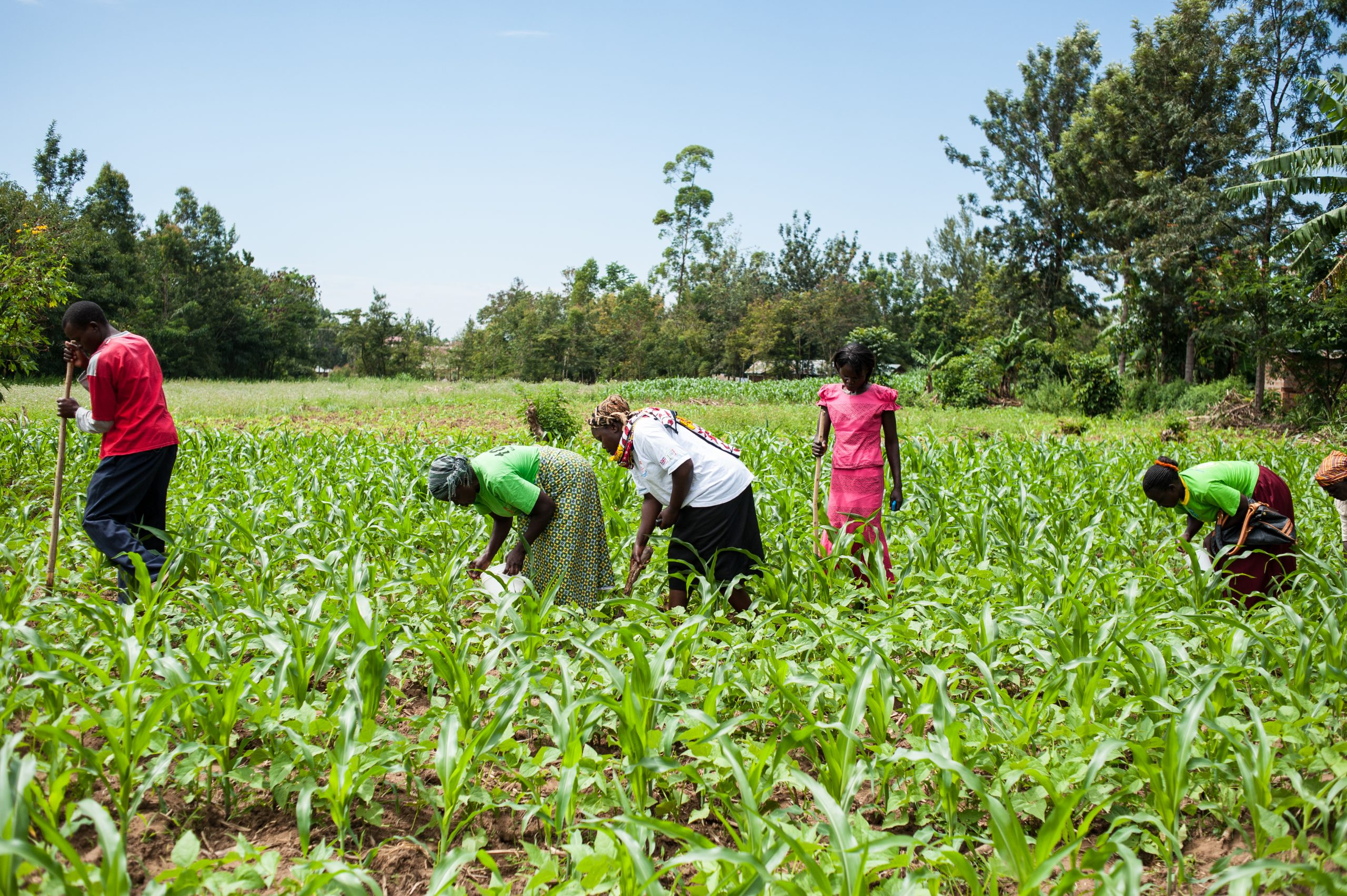 Going far, together: Breaking silos to unlock smallholder finance